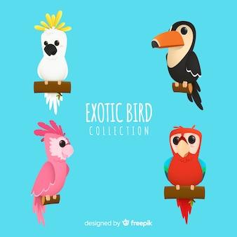 Style plat de la collection d'oiseaux exotiques