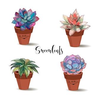 Succulentes en pots d'argile