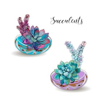 Succulentes en pots de verre