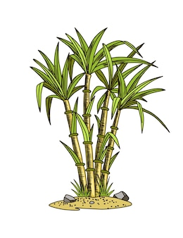 Sucre de canne. usine de canne à sucre. gravure d'aliments biologiques naturels dessinés à la main ou d'ingrédients naturels. bambou de sucre frais.