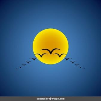 Sun avec troupeau de mouettes
