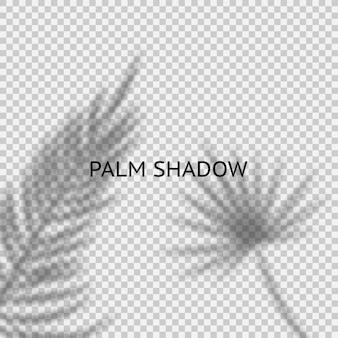 Superposition d'ombre de feuilles de palmier sur le fond transparent