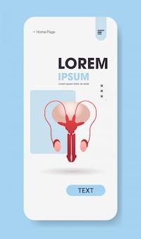 Système reproducteur masculin anatomie médecine concept de soins de santé écran smartphone application mobile vertical copie espace plat