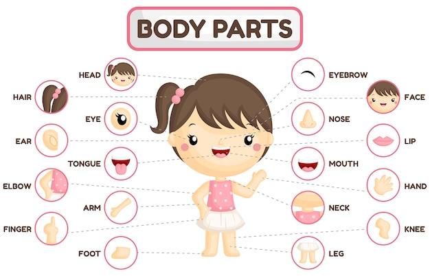 Tableau des parties du corps de la fille
