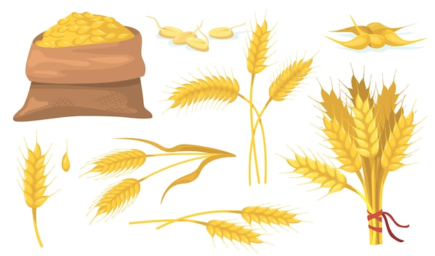 Tas de blé mûr jaune, épis et grains ensemble plat.