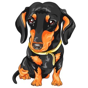 Teckel de chien de vecteur