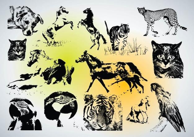 Télécharger vecteurs animaux