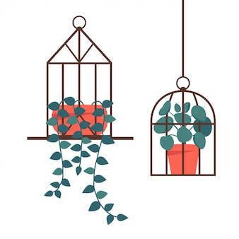 Terrarium debout et suspendu avec des plantes en pot