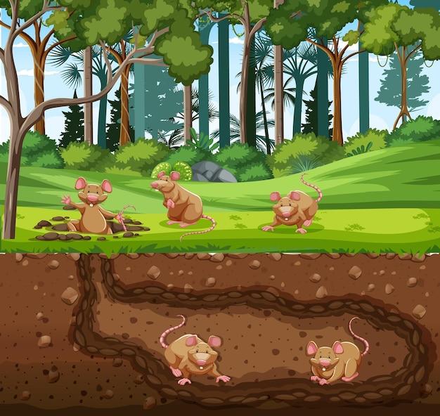 Terrier d'animaux souterrain avec une famille de rats