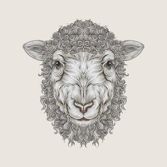 Tête d'agneau dessin à la main