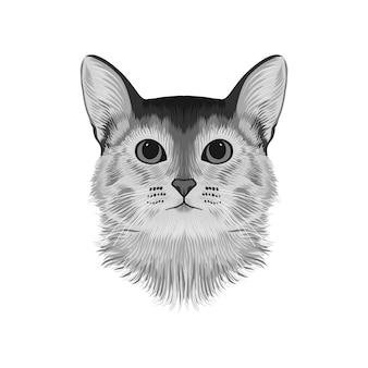 Tête de chat d'abyssinie avata