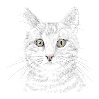 La tête d'un chat avec une moustache. croquis de dessin à la main au crayon isolé sur fond blanc.
