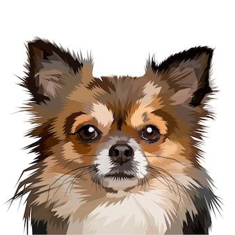 Tête de chien de poméranie