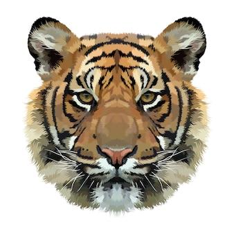 Tête de tigre isolée sur fond blanc
