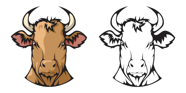 La tête d'une vache.