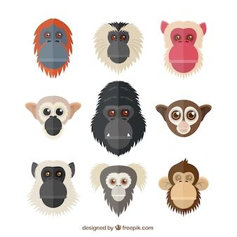 Têtes de primates