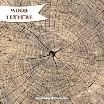 Texture du tronc d'arbre cuted