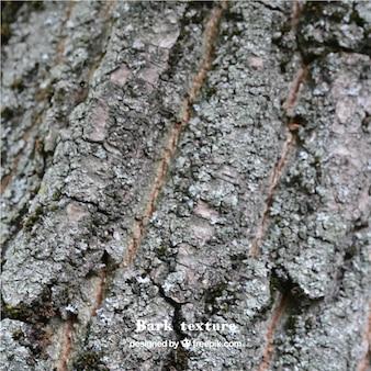 Une texture de l'écorce des arbres