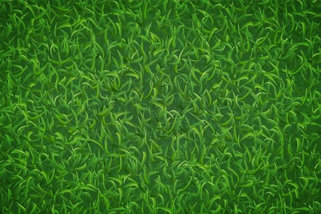 Texture de l'herbe de la pelouse.