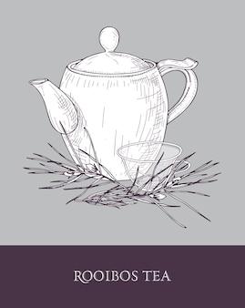 Théière élégante, tasse en verre avec thé rooibos et plante avec des feuilles