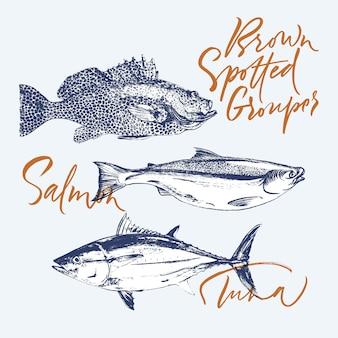 Thon, saumon, mérou tacheté de brun
