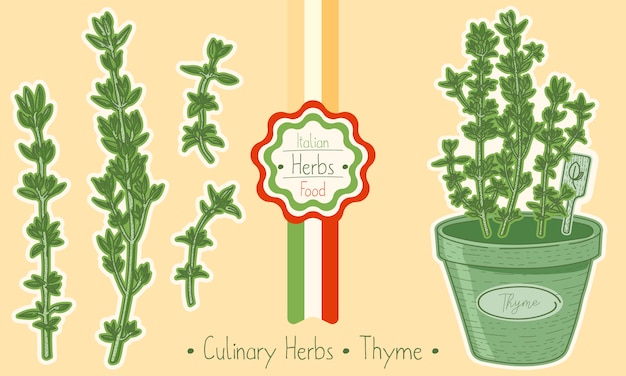 Thym aux herbes alimentaires et culinaires