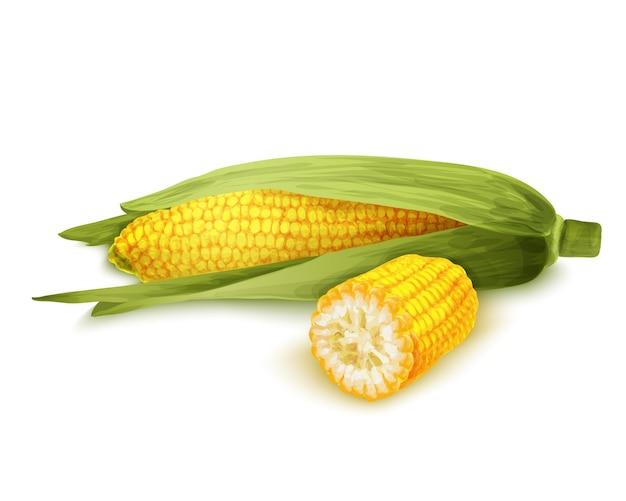 Tige de maïs isolée