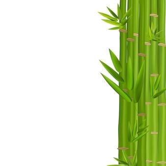 Tiges colorées et feuilles de bambou