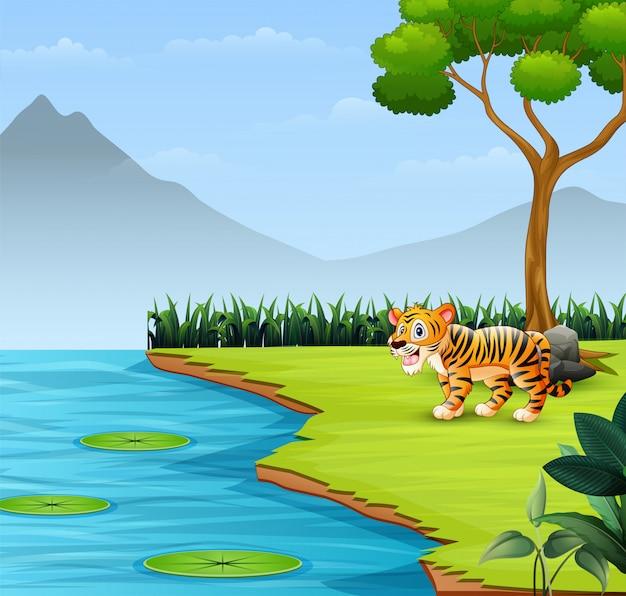 Tigre bébé mignon rugit au bord de la rivière
