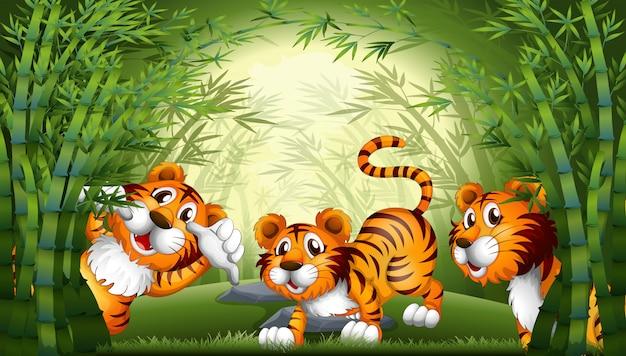 Tigre dans la forêt de bambous