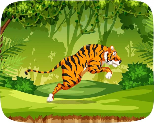 Tigre dans la scène de la jungle