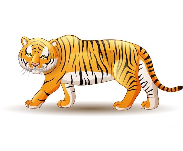 Tigre isolé sur fond blanc