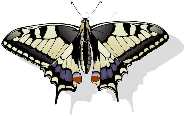 Tigre machaon papilio glaucus papillon