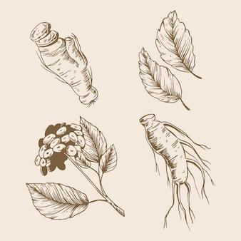 Tirage de la collection de plantes de ginseng