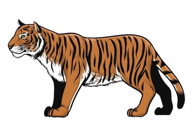 Tiré par la main d'animal tigre isolé sur blanc