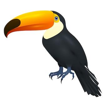 Toco toucan, sur fond blanc, illustration réaliste