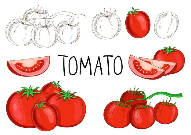 Tomate isolée sur fond blanc