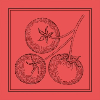 Tomate, nourriture italienne, dessiné