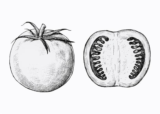 Tomates fraîches dessinées à la main