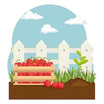 Tomates panier ferme produit