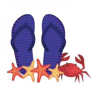 Tongs d'été et crabe avec étoile de mer