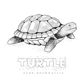 Tortue de vecteur, illustration animale dessinée à la main