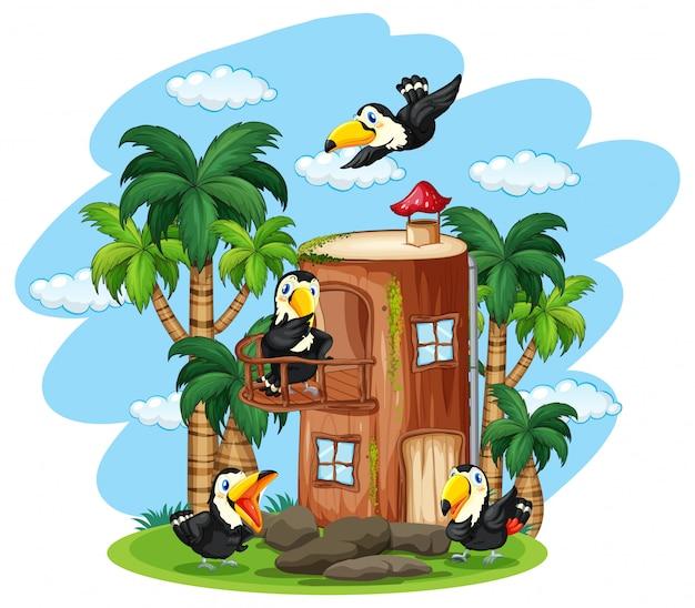 Toucan oiseau à la maison en bois