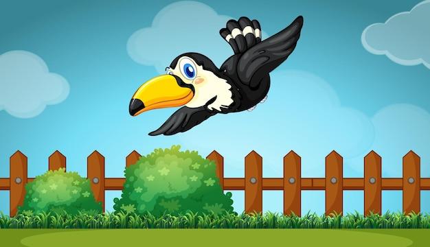 Toucan survolant le champ