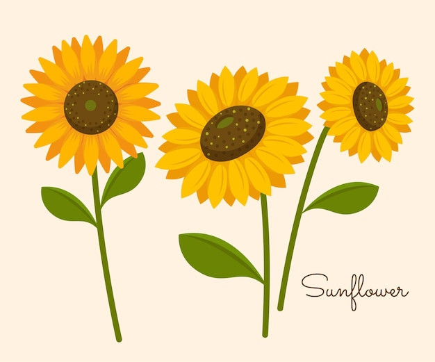 Tournesols jaunes qui fleurissent en automne