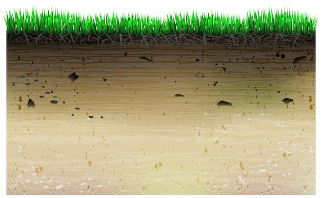 Une tranche de la géologie du champ et des plantes.