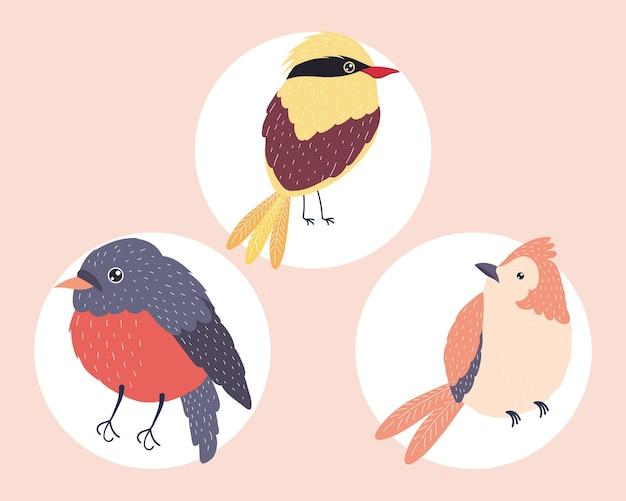 Trois espèces d'oiseaux