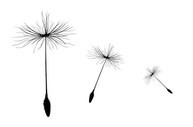 Trois graines volantes d'un pissenlit pour la décoration