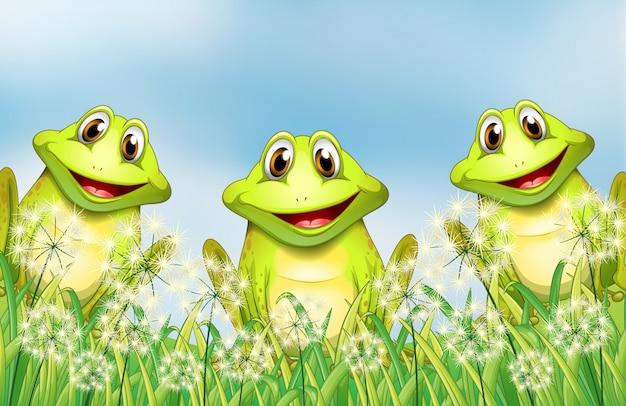 Trois grenouilles dans le jardin