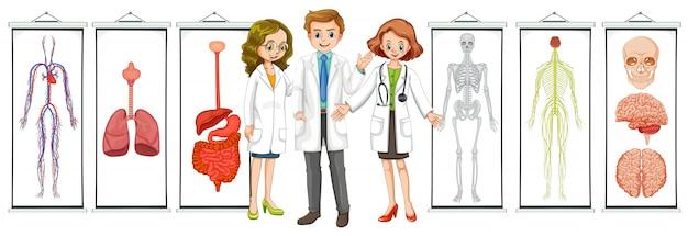 Trois médecins et différents schémas du système humain